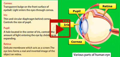The Human Eye and Its Working-class-10th